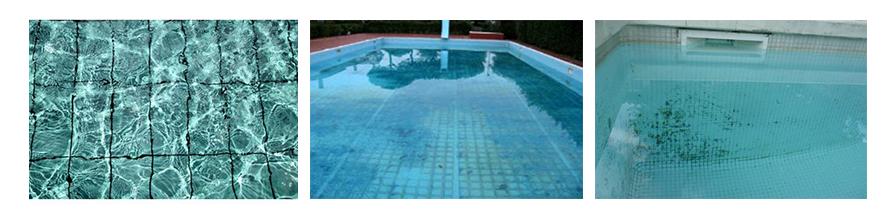 algues piscine