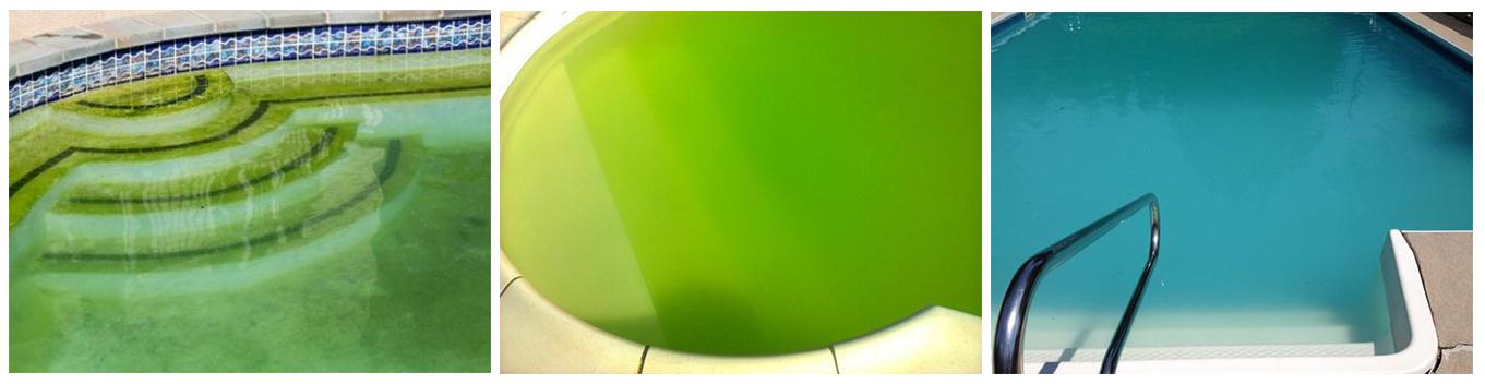 algues vertes, eau trouble